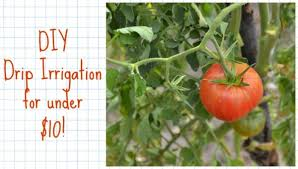 diy drip irrigation system costs less than 10