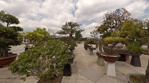 san antonio botanical garden courtyard near entrance early