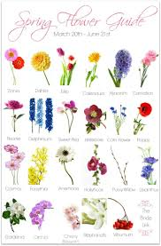 wedding flowers names different types of flowers dahlia name captures