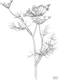 fennel coloring page free printable coloring pages