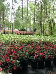 home design app review plant nursery waco tx lower azalea 2 home design app review