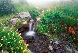 nature beautiful flowers falls rocks parks awesome waterfalls
