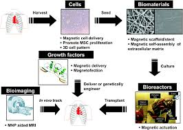 emerging translational research on magnetic nanoparticles for