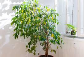 plante d駱olluante chambre sélection de 24 plantes dépolluantes pour votre intérieur