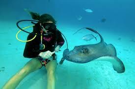 le de plongée sous marine exposure marine sub m3 le torche