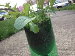 to make a self watering seed starter pot from a 2 liter pop bottle