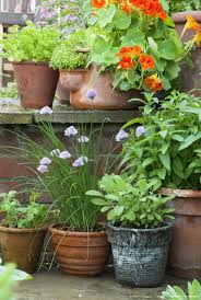 144 best growing herbs in containers images on pinterest growing