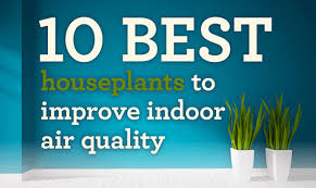 best plants for air quality 10 best plants to improve indoor air quality infographic visualistan