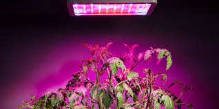 led lights for indoor plants 7 ways led lighting can help indoor plants and gardens