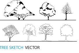 tree sketch vector architectural resources arch student com