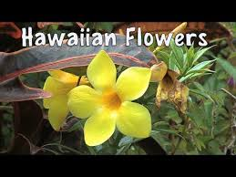 Hawaiian Flowers And Plants - flowers of hawaii a visual documentary stunning tropical