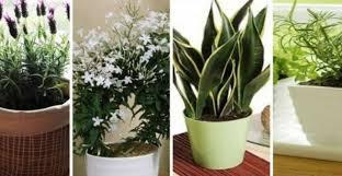 plante d駱olluante chambre 10 plantes que vous devriez avoir dans votre chambre pour un