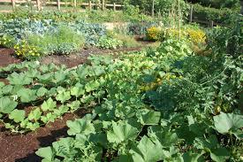 design home vegetable garden ideas beautiful plans seg2011 com