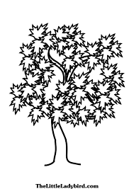 trees coloring pages thelittleladybird com