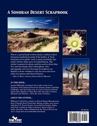 native sonoran desert plants a sonoran desert scrapbook some desert plants of kino bay and