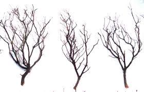 manzanita branches wholesale manzanita branches from artisans manzanita