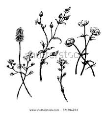 stem flowers flower stem stock images royalty free images vectors