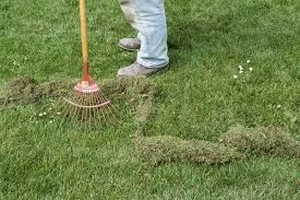 How To Get Rid Of Moles In The Backyard by How To Get Rid Of Moss In Lawns