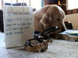 Dog Shaming Meme - dog shaming funny pics of pet shaming just 4 pet care