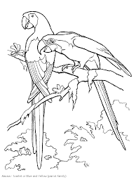tucan outline rain forest coloring pages k 3 coloring