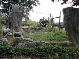 bentley orangutan zoo atlanta photo galleries zoochat