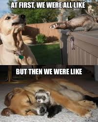 Ferret Meme - meme dog meets ferret viral viral videos