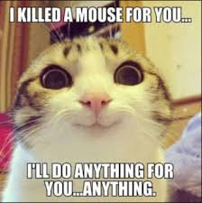 Funny Animals Meme - funny animals memes that make you laugh out loud funny animal memes