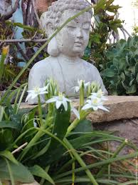 buy concrete bust of buddha for home decor and garden grey brown