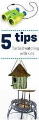 167 best birds images on pinterest bird theme animal crafts and