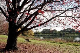 Botanical Garden Sydney by Sydney U0027s Centennial Park And Botanic Gardens To Merge Abc News