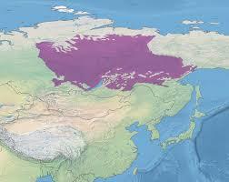 taiga native plants east siberian taiga wikipedia