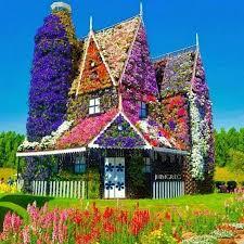 flower house in dubai en wij waren al blij met onze wilde