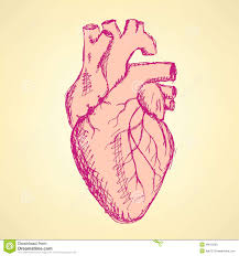 sketch human heart in vintage style stock vector image 46015030