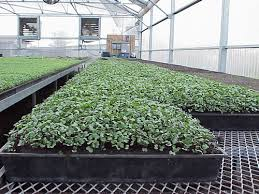 green house tips