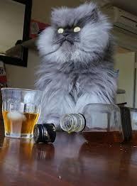 Colonel Meow Memes - colonel meow having a couple dozen shots of black label while