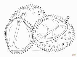 jackfruit coloring pages coloring pages coloring pages
