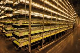 world u0027s largest indoor farm u0027 to rise in an unlikely spot in south