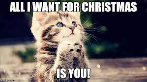All I Want For Christmas Is You Meme - praying cat imgflip