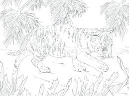 snow tiger coloring page tiger cub coloring pages tiger face black and white free cute baby