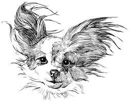 Petit chien papillon coloriage à imprimer  fun stuff for summer