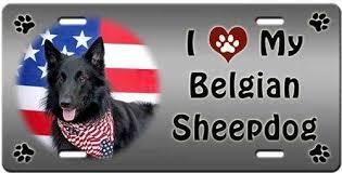 belgian sheepdog newsletter belgian sheepdog license plate love ebay
