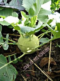 winter vegetable gardening