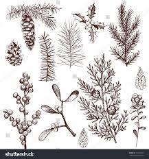 christmas plants set vector handdrawn illustration stock vector