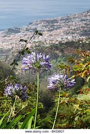 Madeira Flowers - madeira flower city view stock photos u0026 madeira flower city view