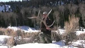 When Do Deer Shed Their Antlers by Tines Up Tuesday Episode 35 Watch A Bull Elk Shed His Antler