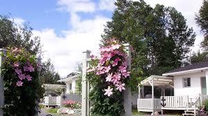 by d u0027 bay cabins cottage accommodations next to terra nova