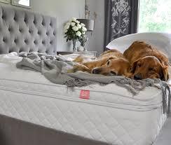 Comfort Retrievers A New Master Bedroom Mattress Decor Gold Designs