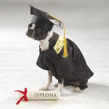 dog graduation cap and gown did look online and all the puppy