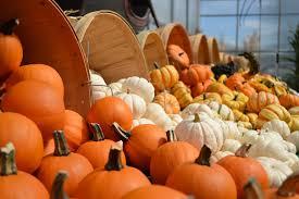 halloween pumpkin transparent background green tip pick an organic pumpkin sweet greens