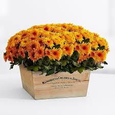 thanksgiving centerpieces plants proflowers